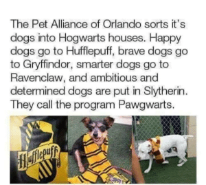 Saw this somewhere else.. thought it fits here.: The Pet Alliance of Orlando sorts it's  dogs into Hogwarts houses. Happy  dogs go to Hufflepuff, brave dogs go  to Gryffindor, smarter dogs go to  Ravenclaw, and ambitious and  determined dogs are put in Slytherin  They call the program Pawgwarts. Saw this somewhere else.. thought it fits here.
