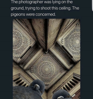 What kind pigeons: The photographer was lying on the  ground, trying to shoot this ceiling. The  pigeons were concerned.  11 What kind pigeons