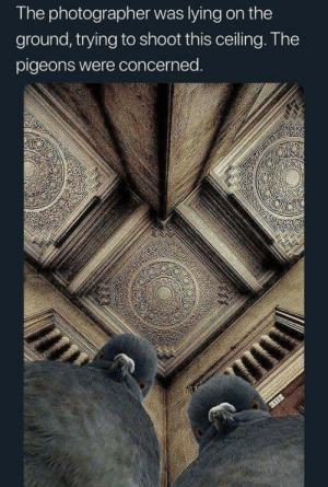 What She Sees: The photographer was lying on the  ground, trying to shoot this ceiling. The  pigeons were concerned.  111 What She Sees