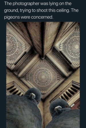 "Huh, Instagram, and Target: The photographer was lying on the  ground, trying to shoot this ceiling. The  pigeons were concerned. gallusrostromegalus:  the-last-hair-bender:  tygermama: ""We heard youse are behind on your payments to Fat Tony.""  I ALMOST SPIT MY ROOTBEER   ""Think you're all aesthetic, huh? A real instagram Wiseguy!  You want something to blog about? We'll give ya something to blog about!"""
