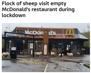 the phrase old McDonald had a farm has never been more relevantvia @itvnews: the phrase old McDonald had a farm has never been more relevantvia @itvnews