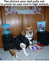 "Dad, Memes, and Music: The picture your dad pulls out  to prove he was cool in high school  SQUEAKOS  UNDER THE SI  ARK  KOHA  OMEGA SİRİPS  Bs  @beagle baby beastie ""And we played REAL music at my Prom!"" @beagle_baby_beastie 🕺 GoingStag barkboxday barbox beagle dog prom promnight DoTheHustle"