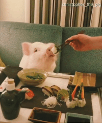 Dank, Spirited Away, and Live: the pig The live action Spirited Away looks great!  By Christopher the Pig