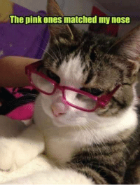 Memes, Match, and Pink: The pink ones matched my nose For more cute pics LIKE us at The Purrfect Feline Page