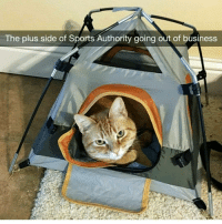 Memes, Sports Authority, and Tree: The plus side of Sports Authority going out of business resting up before he summits the cat tree | follow @chaos.reigns_ for more 🐱