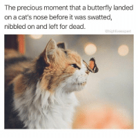 Cats, Memes, and Precious: The precious moment that a butterfly landed  on a cat's nose before it was swatted  nibbled on and left for dead.  @highfive expert Nature hits me right in the feels sometimes.