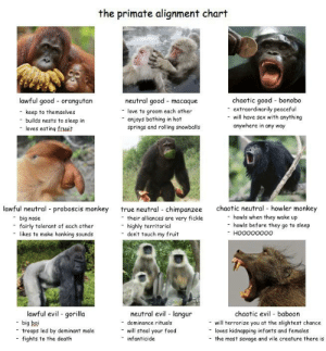 Food, Go to Sleep, and Love: the primate alignment chart  lawful good orangutan  chaotic good bonobo  extraordinarily peaceful  will have sex with anything  anywhere in any way  neutral good macaque  love to groom each other  keep to themselves  enjoys bathing in hot  springs and rolling snowballs  builds nests to sleep in  loves eating fruuit  -  chaotic neutral howler monkey  howls when they wake up  howls before they go to sleep  lawful neutral proboscis monkey  true neutral chimpanzee  their alliances are very fickle  big  fairly tolerant of each other  nose  highly territorial  don't touch my fruit  -  HOOoooooo  likes to  make honking sounds  lawful evil gorilla  big boi  troops led by dominant male  fights to the death  neutral evil langur  chaotic evil baboon  dominance rituals  will terrorize you at the slightest chance  loves kidnapping infants and females  the most savage and vile creature there is  will steal your food  infanticide  - The Primate Alignment Chart — made this after a semester of Human Bio