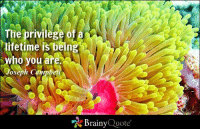 Memes, Lifetime, and Ocean: The privilege o  lifetime is being  ho you are.  Joseph Campbell  Brainy  Quote The privilege of a lifetime is being who you are. - Joseph Campbell https://www.brainyquote.com/quotes/authors/j/joseph_campbell.html #brainyquote #QOTD #inspiration #ocean #life