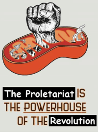 proletariat: The Proletariat  THE POWERHOUSE  OF THE  Revolution
