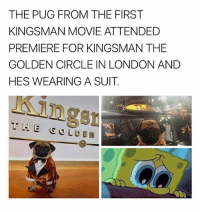 What a good boy 😊 • Follow @savagememesss for more posts daily: THE PUG FROM THE FIRST  KINGSMAN MOVIE ATTENDED  PREMIERE FOR KINGSMAN THE  GOLDEN CIRCLE IN LONDON ANDD  HES WEARING A SUIT  ngs What a good boy 😊 • Follow @savagememesss for more posts daily