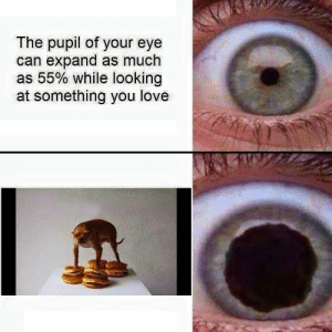 Love, Eye, and Looking: The pupil of your eye  can expand as much  as 55% while looking  at something you love