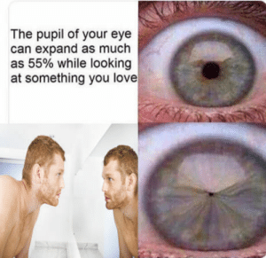 Love, Eye, and Looking: The pupil of your eye  can expand as much  as 55% while looking  at something you love I hate myself :)