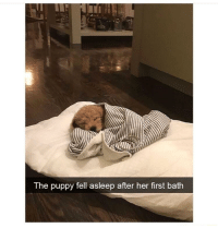 Journey, Puppy, and Time: The puppy fell asleep after her first bath