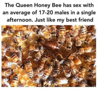Queen Honey Bee