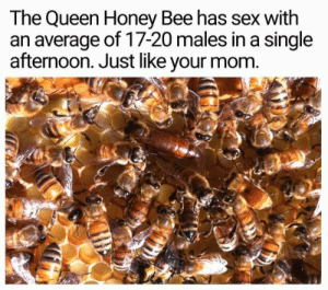An Average: The Queen Honey Bee has sex with  an average of 17-20 males in a single  afternoon. Just like your mom.