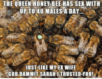 THE QUEEN HONEY BEE HAS SEX WITH  UP TO 40 MALES A DAY  JUST LIKE MY EX WIFE  GOD DAMMIT SARAHITRUSTEDYOU! ~Beast~