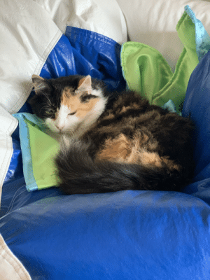 The Queen loves laying on the bean bag.: The Queen loves laying on the bean bag.