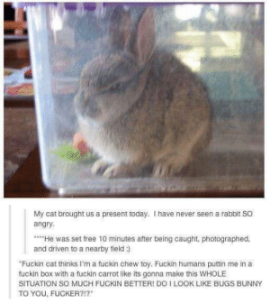 The rabbit: my disappointment is immeasurable and my day is ruined: The rabbit: my disappointment is immeasurable and my day is ruined