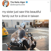Beautiful, Family, and Memes: The Ratio Alger  @alexqarbuckle  my sister just saw this beautiful  family out for a drive in taiwan  商業闪業公會  , Follow me @antisocialtv @lola_the_ladypug @x__social_butterfly__x @x__antisocial_butterfly__x