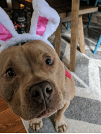 Easter, The Real, and Bunny: The REAL Easter Bunny