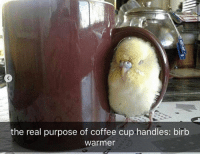 Animals, Cute, and Coffee: the real purpose of coffee cup handles: birb  Warmer 30 Cute Pictures Of Animals With Captions To Make Your Day Better