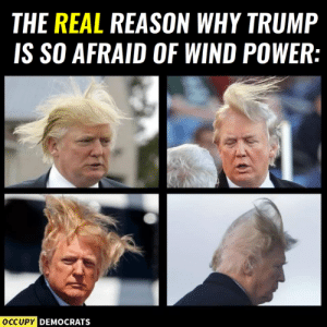 LOL! 😂  Follow Occupy Democrats for more.: THE REAL REASON WHY TRUMP  IS SO AFRAID OF WIND POWER:  DEMOCRATS LOL! 😂  Follow Occupy Democrats for more.