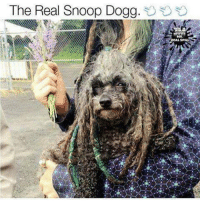Our fans get 40% Off, use code: FB40 http://bitly.com/2vZmBSF: The Real Snoop Dogg.  RCAL SPILL Our fans get 40% Off, use code: FB40 http://bitly.com/2vZmBSF