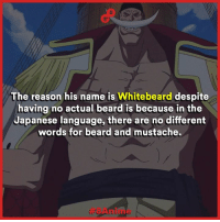 One of the strongest characters in One Piece.   8Anime: The reason his name is Whitebeard  despite  having no actual beard is because in the  Japanese language, there are no different  words for beard and mustache. One of the strongest characters in One Piece.   8Anime