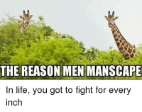 Life, Memes, and Tree: THE REASON MEN MANSCAPLE  in life, you got to fight for every  inch In a world where every inch counts, don't sell yourself short… 🦒 ^ After you've @manscaped the hedges, the tree stands taller → Manscaped.com. ad