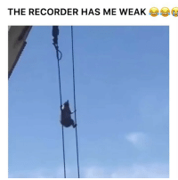 Wtf clip of the day 😭😂: THE RECORDER HAS ME WEA Wtf clip of the day 😭😂