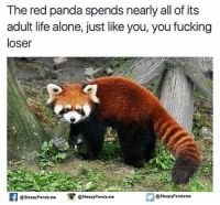 Red pandas: The red panda spends nearly all of its  adult life alone, just like you, you fucking  loser  Sleepy Pandame  @Sleepy Panda. me  Sleepy Panda. me