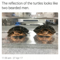 Memes, 🤖, and Turtles: The reflection of the turtles looks like  two bearded men.  11:55 am 27 Apr 17 You're welcome. | For more @aranjevi
