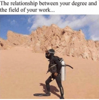 Memes, Work, and 🤖: The relationship between your degree and  the field of your work