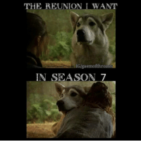 YES! anyone else? 👀: THE REUNION I WANT  IG/gaemofth rones  fb Bestof Gameof Thrones  IN SEASON 7 YES! anyone else? 👀