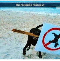 Memes, Revolution, and 🤖: The revolution has begun We bet this is an activist's dog! 🤣 . Via @liv.fre