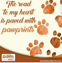 mercola: The road  my heait  paved with  Healthy  With Dr. Karen Becker  presented by Mercola  Healthy Pets Mercola.com