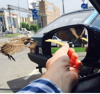 Funny, Wings, and Shutter: The rolling shutter effect. Wings in different positions.