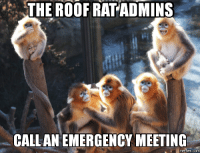 meeting: THE ROOF RAT ADMINS  CALL AN EMERGENCY MEETING  memes. COM
