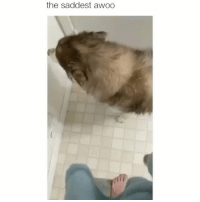 Memes, 🤖, and For: the saddest awoo Follow @petroom for the cutest memes!!