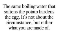 Memes, Potato, and Water: The same boiling water that  softens the potato hardens  the egg. It's not about the  circumstance, but rather  what you are made of. Get some sleep. Unless you're in the part of the world that it is daytime, then, take a nap! badsciencejokes BadScienceJokes.com