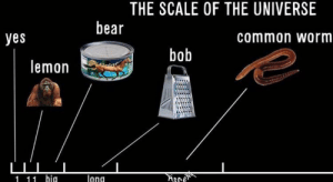 Fall, Meme, and Bear: THE SCALE OF THE UNIVERSE  bear  yes  common worm  bob  lemon  Sld  lang  1 11 hig Does this fall under the category of surreal meme?