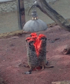 The Secret Meerkat Society (SMS) via /r/funny https://ift.tt/2BPyRdr: The Secret Meerkat Society (SMS) via /r/funny https://ift.tt/2BPyRdr