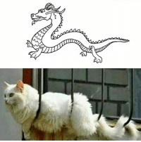 Memes, Chinese, and 🤖: The secret of Chinese legends about dragon revealed.