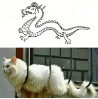 9gag, Dank, and Chinese: The secret of Chinese legends about dragon revealed. https://9gag.com/gag/aq77j6M?ref=fbsc