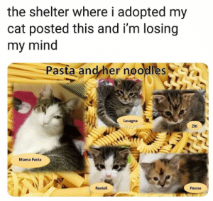 awesomacious:  Two of my favourite things in one: the shelter where i adopted my  cat posted this and i'm losing  my mind  Pasta and her noodles  Lasagna  Ziti  Mama Pasta  Ravioli  Penne awesomacious:  Two of my favourite things in one