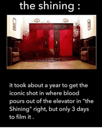 "the shining  it took about a year to get the  iconic shot in where blood  pours out of the elevator in ""the  Shining"" right, but only 3 days  to film it. If anyone can make me an Instagram account or has one that they don't use please DM me!!! I'll return the favor❤️"
