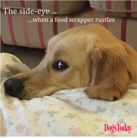 Food, Memes, and 🤖: The side-eye...  ...when a food wrapper rustles  DogsToday What you eating? #sniff  #woofandme