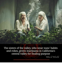Memes, 🤖, and Nun: The sisters of the valley, who wear nuns' habits  and robes, grows marijuana in California's  central valley for healing purpose  Weird World