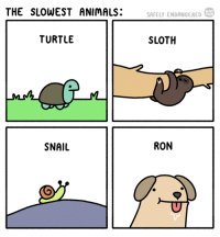 Animals, Memes, and Http: THE SLOWEST ANIMALS:  WEB  SAFELY ENDANGERED  TURTLE  SLOTH  SNAIL  RON ron (http://www.safelyendangered.com/webtoon)