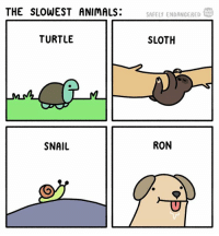 Animals, Memes, and Sloth: THE SLOWEST ANIMALS:  WEB  TOON  SAFELY ENDANGERED  TURTLE  SLOTH  SNAIL  RON webcomics comics safelyendangered ron